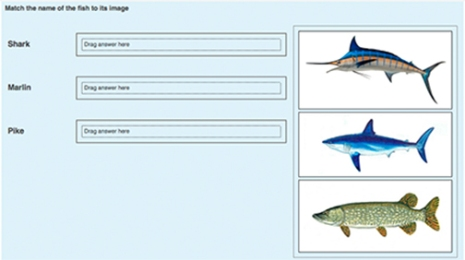fish matching quiz in moodle